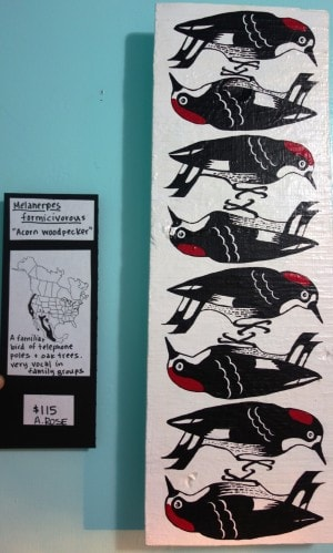 Woodpecker Series by Ariana Rose Palmisano